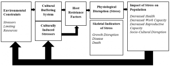 Figure 1. Self-adaptation of Good and Armelagos (1989) revised stress interpretation model, from Temple and Goodman, 2014.