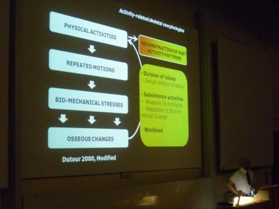 Figure 4 - Prof. Christopher Knüsel presenting his and Dr. Sébastien Villotte's paper on direct osteological evidence for gender division of labour in the LBK (Image Copyright: D. Altoft; kind permission of S. Knüsel)