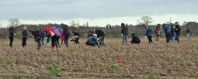 University of York students collecting finds whilst fieldwalking in grids at Torksey (Image Copyright: Julian D. Richards)