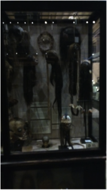 Figure 1. 'Treatment of the Dead':  shrunken heads (Tsantas), scalps, and trophies (Image Copyright: I. Burrell).