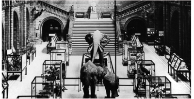 Figure 2. Elephants and cases displayed in Central Hall, The Natural History Museum, London c1924 (Available at: http://www.nhm.ac.uk/visit-us/history-architecture/index.html