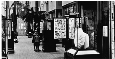 Figure 3. An interior view of the Botany Gallery, The Natural History Museum, London in 1911 (Available at: http://piclib.nhm.ac.uk/results.asp?image=012575).